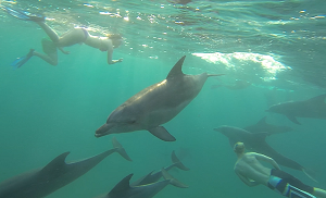 Swim with Dolphins in South Africa