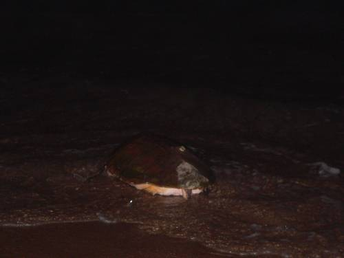 St Lucia Turtle Tours South Africa